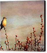 Evening Mocking Bird Canvas Print by Darren Fisher