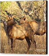 Evening Sets On The Elk Canvas Print by Robert Frederick