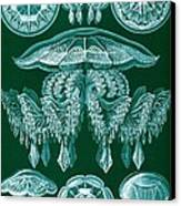 Examples Of Discomedusae Canvas Print by Ernst Haeckel