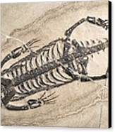 Extinct Reptile Skeleton Canvas Print by Science Photo Library