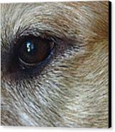 Eye See You Canvas Print by Lisa Phillips