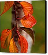 Fall Beauty Canvas Print by Sharon Elliott
