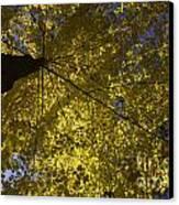 Fall Maple Canvas Print by Steven Ralser