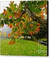 Fall Maple Tree In Foggy Park Canvas Print by Elena Elisseeva
