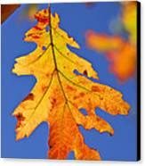 Fall Oak Leaf Canvas Print by Elena Elisseeva