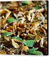 Fallen Leaves Canvas Print by Carlos Caetano