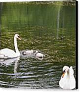 Family Of Swans Canvas Print by Teresa Mucha