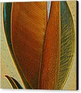 Fantasy Leaf Canvas Print by Ben and Raisa Gertsberg