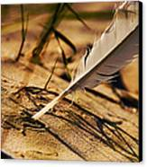 Feather And Sand Canvas Print by Raimond Klavins
