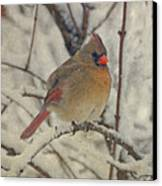 Female Cardinal In The Snow II Canvas Print by Sandy Keeton