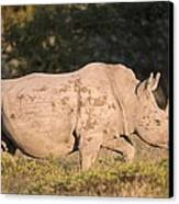 Female White Rhinoceros Canvas Print by Science Photo Library