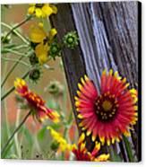 Fenceline Wildflowers Canvas Print by Robert Frederick