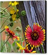 Fenceline Wildflowers Canvas Print by Robert Frederick