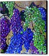 Festival Of Grapes Canvas Print by Eloise Schneider