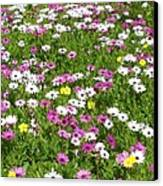 Field Of Flowers Canvas Print by Deborah  Montana