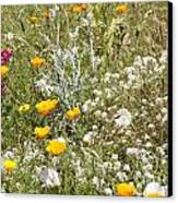 Field Of Flowers Canvas Print by Artist and Photographer Laura Wrede