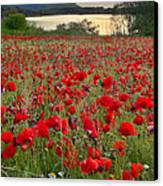 Field Of Poppies At The Lake Canvas Print by Guido Montanes Castillo
