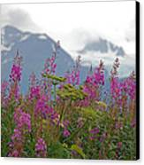 Fireweed Canvas Print by Jim Cook