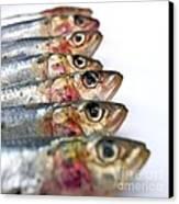 Fishes Canvas Print by Bernard Jaubert