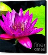 Floating Purple Water Lily Canvas Print by Nick Zelinsky