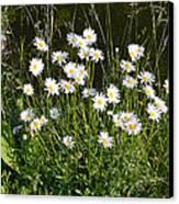 Flora And Fauna Canvas Print by Bishopston Fine Art