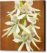 Flower - Orchid - A Gift For You  Canvas Print by Mike Savad