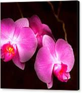 Flower - Orchid - Better In A Set Canvas Print by Mike Savad