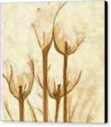 Flower Sketch Canvas Print by Yanni Theodorou