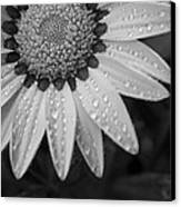 Flower Water Droplets Canvas Print by Ron White