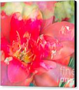 Flowers Bloom In Multiples Canvas Print by Sonja Quintero