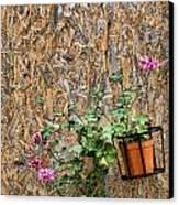 Flowers On Wall - Taromina Canvas Print by David Smith