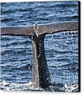 Flukes Of A Sperm Whale 2 Canvas Print by Heiko Koehrer-Wagner