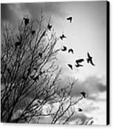 Flying Birds Canvas Print by Elena Elisseeva