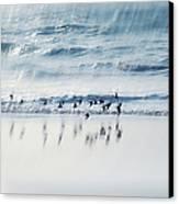 Flying Free Canvas Print by Jenny Rainbow