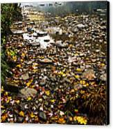 Fog And Fall Color Williams River Canvas Print by Thomas R Fletcher