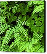 Foliage At Springtime Canvas Print by Andrew Soundarajan