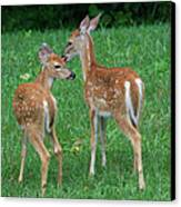 Fond Fawns Canvas Print by Charles Warren