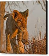 Footloose Canvas Print by Ashley Vincent