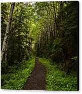 Forest Beckons Canvas Print by Mike Reid