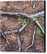 Forest Floor With Tree Roots Canvas Print by Matthias Hauser
