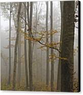 Forest In Autumn Canvas Print by Matthias Hauser