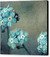 Forget Me Not 01 - S22dt06 Canvas Print by Variance Collections