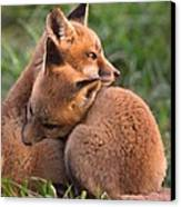 Fox Cubs Cuddle Canvas Print by William Jobes