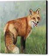 Fox  Canvas Print by David Stribbling