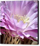 Fragile Beauty Canvas Print by Deb Halloran