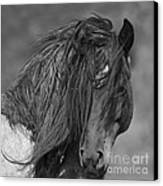 Freedom Close Up Canvas Print by Carol Walker