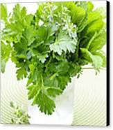 Fresh Herbs In A Glass Canvas Print by Elena Elisseeva