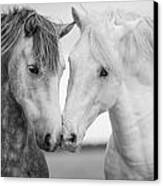 Friends Iv Canvas Print by Tim Booth