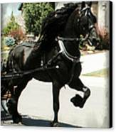 Friesian Driving Canvas Print by Royal Grove Fine Art