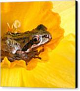 Frog And Daffodil Canvas Print by Jean Noren